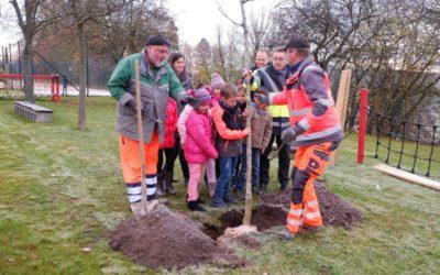 Neue Bäume für die Schule